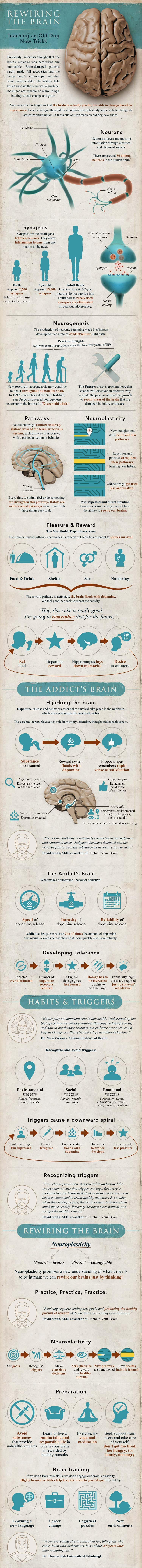 Rewiring the Brain Infographic